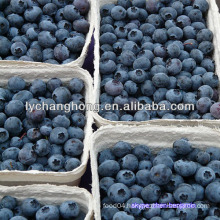 blueberry fruit/IQF frozen blueberry/blueberry price/chinese blueberry