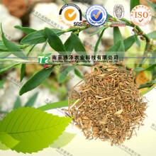100% Pure Natural Herb Medicine Polygonum Aviculare Bian Xu