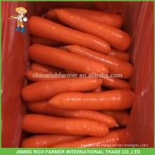 China New Crop Frische Karotte zum Mittelmarkt