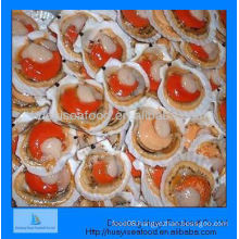 frozen scallop