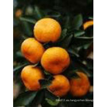 Buen gusto naranja