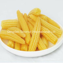 Canned Baby Corn (L size, M Size)