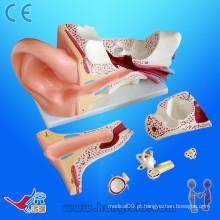 Modelo avançado de orelha de anatomia pvc, modelo de anatomia da orelha