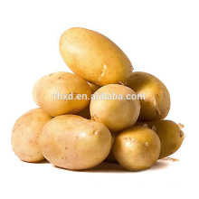 holland potato seeds for sale