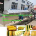 Machine de blanchiment de légumes / machine de processus de légumes / machine de blanchiment de maïs