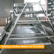 Hot DIP Galvanized Steel Made Automatic Chicken Broiler Cage