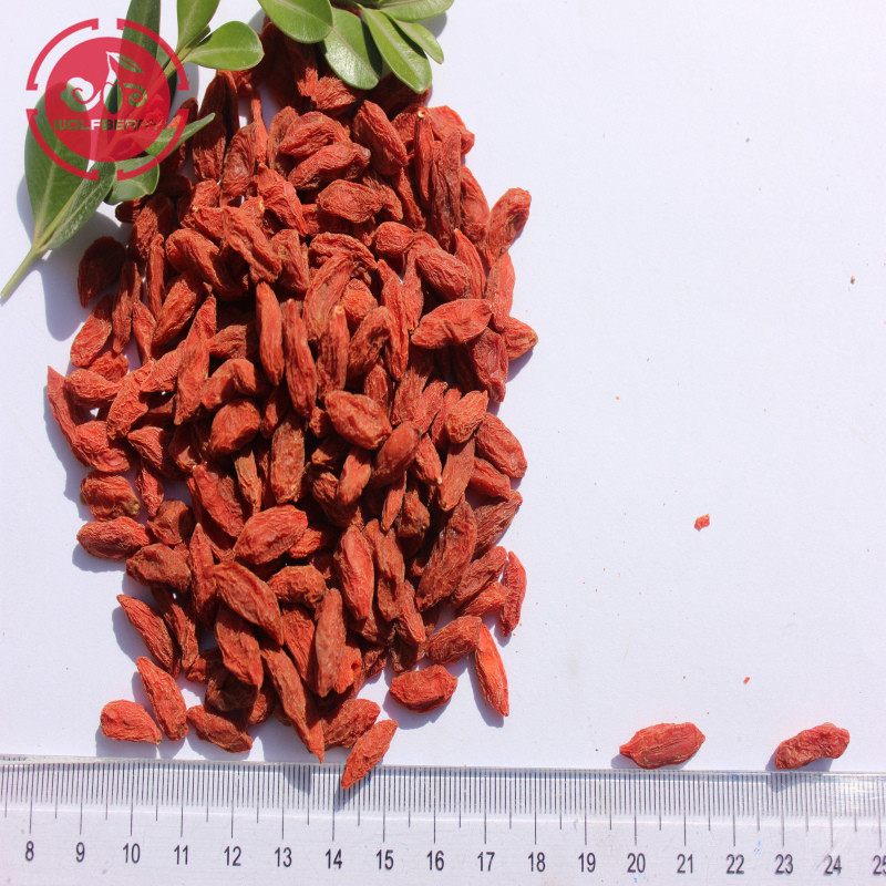 superfoods nature goûter Faible pesticide Baies de Goji