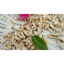5 * 5 mm granulés de Lentinus Edes organiques séchés