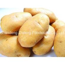 Chinese Wholesale Yellow Potato