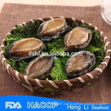 imperial abalone with shell supplier