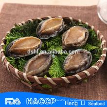 Abalone australiano da venda quente venda