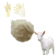 Protéine de blé Préparation de la poudre de protéines