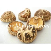 5.5cm up Dried Abnormal Shiitake Mushroom