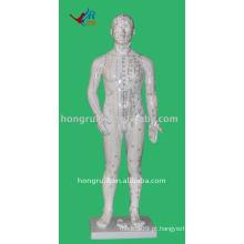 Modelo de acupuntura humana com 70cm com 361 pontos, modelo humano de acupuntura