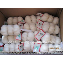 Reine weiße chinesische Knoblauch
