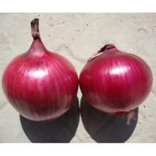 Индау HON02 красный ОП цена семян лука
