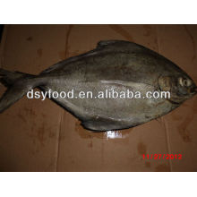 BQF black pomfret fish