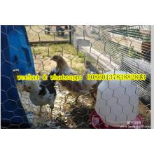 China-Fabrik Chiken Draht-Ineinander greifen / Netz