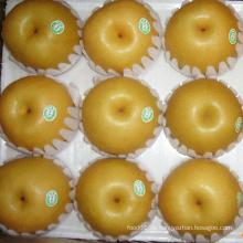 Export New Crop Frische gute Qualität Birne