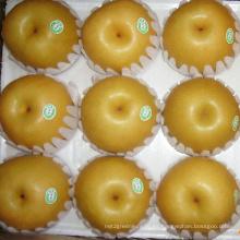 Pera Fengshui china fresca de alta calidad