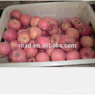 Year 2017 new season fresh red fuji apple