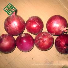 exportar cebolla pequeña fresca de China