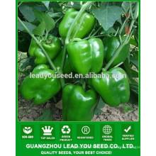 NSP24 Ochy hybride graines de poivrons en vrac pour la croissance, graines de poivrons