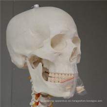 Esqueleto de perro nuevo producto