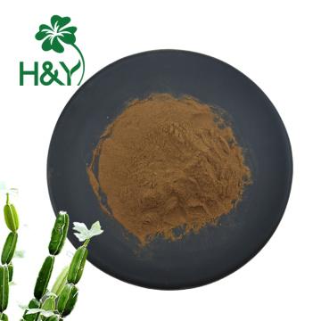 extrato natural da planta extrato cissus quadrangularis