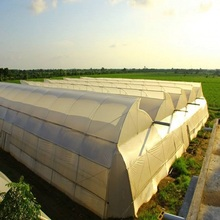 Low price for Offer Pc Board Greenhouse, Pc Sheet Covering  Greenhouse, Greenhouse  Pc Board from China Supplier Agriculture Plastic Large Multi Span Greenhouse for Sale export to Singapore Exporter