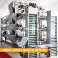 Heißes galvanisiertes Material H-Rahmen 5 Reihen Geflügel-Ausrüstung für das Legen von Hennen / von Schichten / von Hühnerei