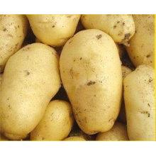 Лучшее качество Конкурентоспособная цена Свежий картофель