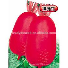 R04 Banye pele vermelha carne branca sementes de rabanete, sementes de hortaliças