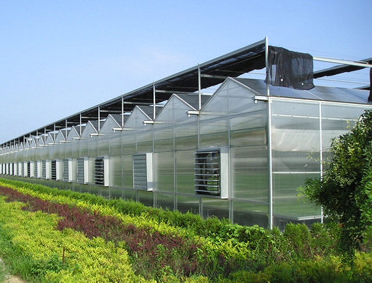 Venlo Multi Span Greenhouse