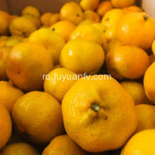 Baby orange mandarine sunt direct din fabrică