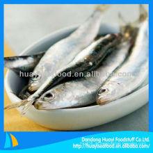 Frisch gefrorene Sardine Sardine Prozess
