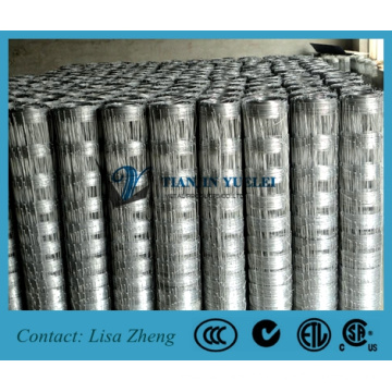 Hot DIP Galvanized Grassland Fence/Farm Fence (XY-005)