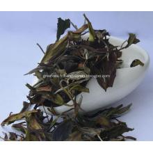 Thé blanc de haute qualité Shou Mei