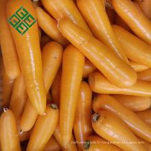 carotte d'exportation de la Chine ferme carotte fraîche naturelle