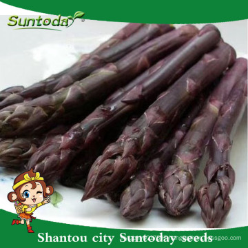 Suntoday vegetable F1 assorted fresh Europe high times vegetable hybrid seed catalogue for sale green asparagus seeds(A44003)