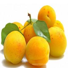 Apricot purê concentrado com preço mais barato e melhor qualidade