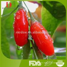 ningxia organic dried Chinese wolfberry/bulk goji berries