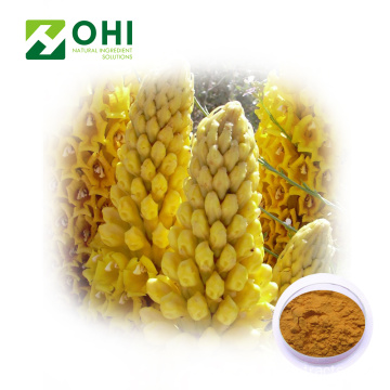Cistanche Tubulosa Extract Powder