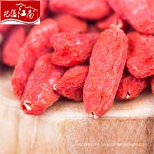 New fresh distributor ningxia goji berry