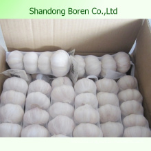 Export Hot Sale Normal White Garlic