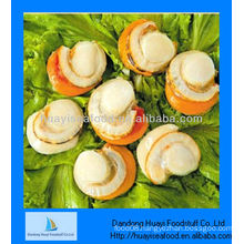 Frozen scallop meat