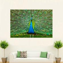 Pintura hermosa de la imagen del pavo real en lona