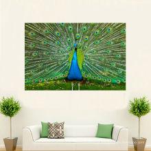 Pintura bonita da imagem do pavão na lona