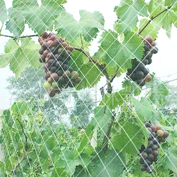 garden grape anti bird net