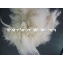 Dehaired y Carded Mongolia interior gris claro de cachemira fibra 34-36 mm